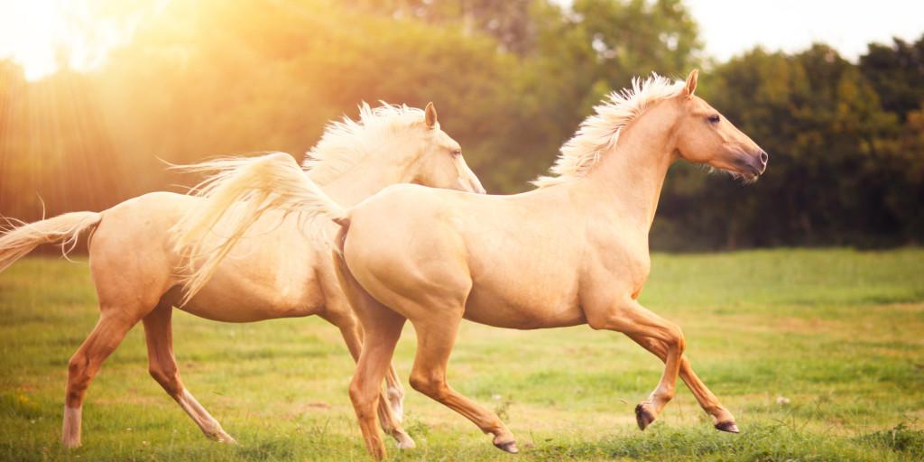4249185-horse (1)